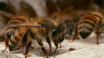 Episode 6: Bee Sting Therapy